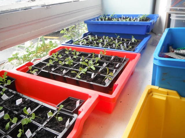 Y4 National Seeds Experiment